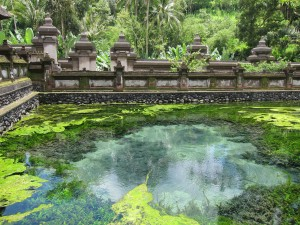 Bali's Tirta Empul, or temple of sacred waters...is kind of growy.